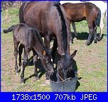 Fotografie del mio ex cavallo di pura razza spagnola-175-jpg