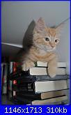 Ecco Dalila, una palla di pelo rossa-pestifero-adoro-i-libri-jpg
