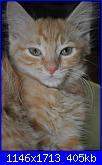 Ecco Dalila, una palla di pelo rossa-pestifero-miss-dalila-jpg