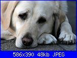 Preghiera di un cane abbandonato-cane_triste-jpg