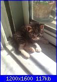 Ecco il micino che ha trovato un'amica di mio figlio-immag0084-jpg