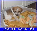 E' arrivato un cucciolo in casa!-sdc12377-jpg