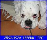 Kina, la mia cucciolona-p1230451-jpg