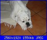 Kina, la mia cucciolona-p1230448-jpg