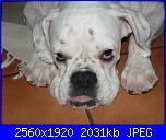 Kina, la mia cucciolona-p1230454-jpg