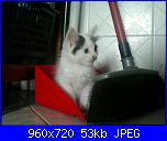Calliope: una micia dispettosa!-396053_4547335450706_1241044810_n-jpg