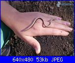 mess. per Fra-%5Bimmagini-4ever-eu%5D-orbettino-serpente-mano-pietra-147123-jpg