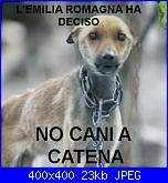 buone notizie : emilia romagna divieto catene per cani e...-299265_559561060744347_552794832_n-jpg