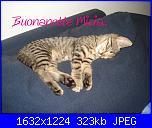"""Con immenso piacere vi prensento la """"tigre"""" di casa......Micia!-25giugno2013-34-jpg"""