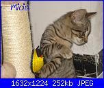 """Con immenso piacere vi prensento la """"tigre"""" di casa......Micia!-25giugno2013-4-jpg"""