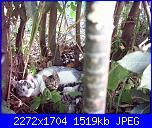 i miei gatti-pic_0114-jpg