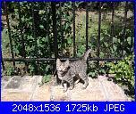 i miei gatti-foto0760-jpg