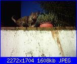 i miei gatti-pic_0142-jpg