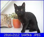 Giornata mondiale del gatto-dscn0040-jpg