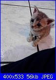 cucciolo !!!-10723126_838520579511893_1872584852_n-jpg