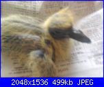 L'ho trovato...-uccello-001-jpg
