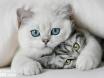 Gli schemi di pazzzia-gatti-bellissimi-jpg