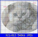 Gli schemi di pazzzia-gatti1-copia-jpg