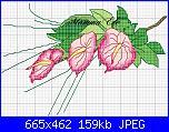 schemi di MAMMAELE-anthurium-rosa-ele-jpg