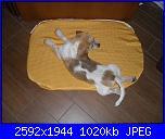 materassino per cane-sdc12397-jpg