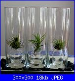 Curiosità Tillandsia-air-plants-cu-300-jpg