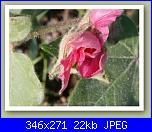 Cotone e......crocette-cotone_bio_small_02-jpg