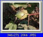 Cotone e......crocette-cotone_bio_small_03-jpg