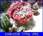 Piante grasse e dintorni-chamaecereus-silvestrii-22-5-06-jpg