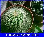 Piante grasse e dintorni-echinocactus-grusonii-28-4-2004-jpg