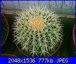 Piante grasse e dintorni-echinocactus-grusonii-6-10-05-jpg