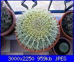 Piante grasse e dintorni-echinocactus-grusonii-6-5-09-jpg