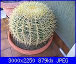 Piante grasse e dintorni-echinocactus-grusonii-6-9-10-jpg