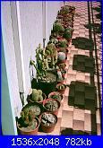 Piante grasse e dintorni-collezione-28-3-06-jpg