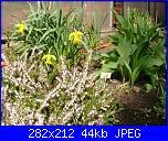 bordura fiorita-erica-narcisi-jpg