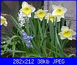bordura fiorita-narcisi-giacinti-jpg