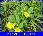 bordura fiorita-primule-bordo-jpg