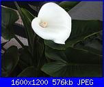E' primavera-imgp3248-jpg
