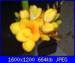 E' primavera-imgp3249-jpg