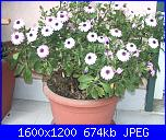 E' primavera-imgp3247-jpg