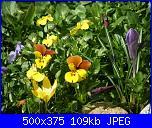 I fiori di Dana2011-violette-1-dana2011-jpg