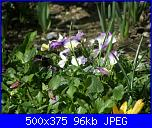 I fiori di Dana2011-violette2-dana2011-jpg