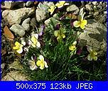 I fiori di Dana2011-violette-3-dana2011-jpg