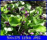 I fiori di Dana2011-violette-dana2011-jpg