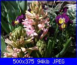 I fiori di Dana2011-giacinti-1-dana2011-jpg