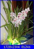 pianta di orchideee :)-100_2592-jpg