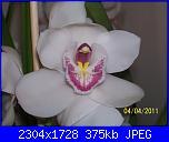 pianta di orchideee :)-100_2591-jpg