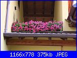i fiori di Valentina-immagine-034-jpg