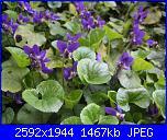 I fiori di Eli75-img_3043-jpg