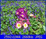 I fiori di Eli75-img_3048-jpg