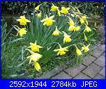 I fiori di Eli75-img_3044-jpg